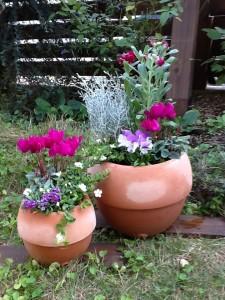 赤い花の鉢植え_写真
